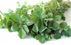 Fenugreek Herb